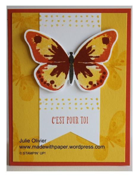Butterfly Basics-014