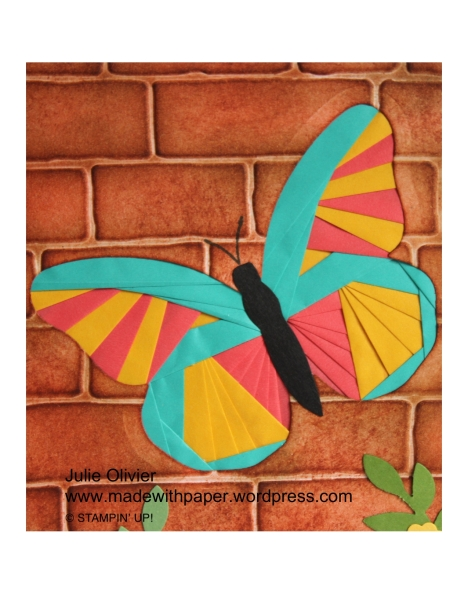 Butterfly Basics-016